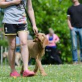 Jak naučit psa chodit u nohy