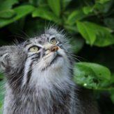 Jak odpudit cizí kočky – co odpuzuje kočky