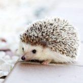 Co žere ježek
