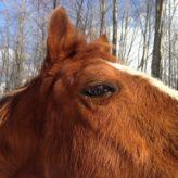 Kolika u koní