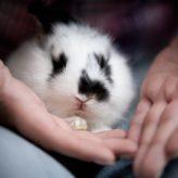 Nemoci králíků a jejich projevy