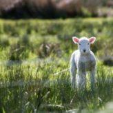 Přístřešek pro ovce