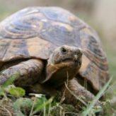 Chov želv