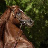 Jména pro koně