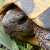 Jméno pro želvu