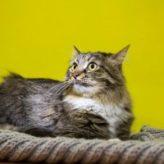 Kastrace kočky