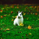 Co smí a nesmí zakrslý králík