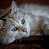 Odčervení koček