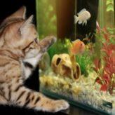 Jak dlouho svítit v akváriu