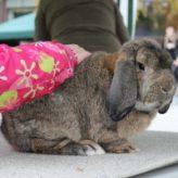 Výstava králíků
